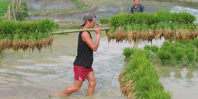 rijstvelden noord vietnam