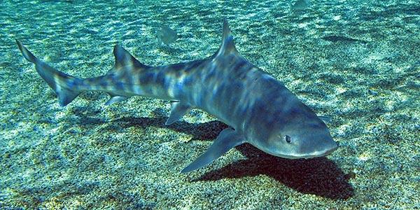 duiken zuid afrika haai