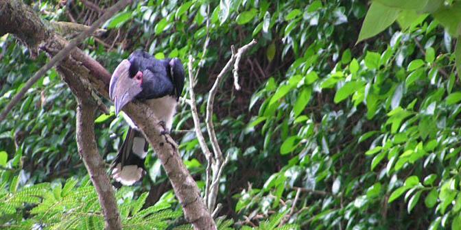 neushoornvogels tuin