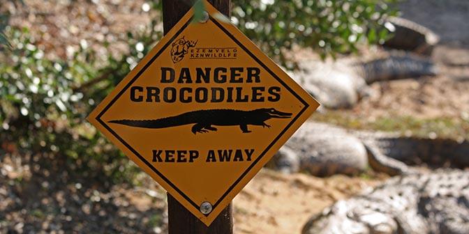 krokodil st lucia