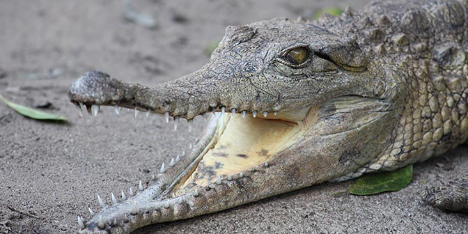 krokodillen sint lucia zuid afrika