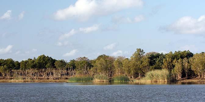 sint lucia wetland