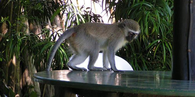 wildlife zuid-afrika