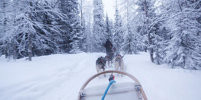 husky rijden finland