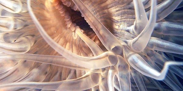anemoon oosterschelde zeeland duiken