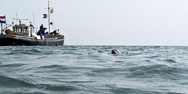 zeehonjd oostersche;de duiken